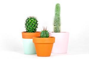 Gardners.cz - Kaktus mix2